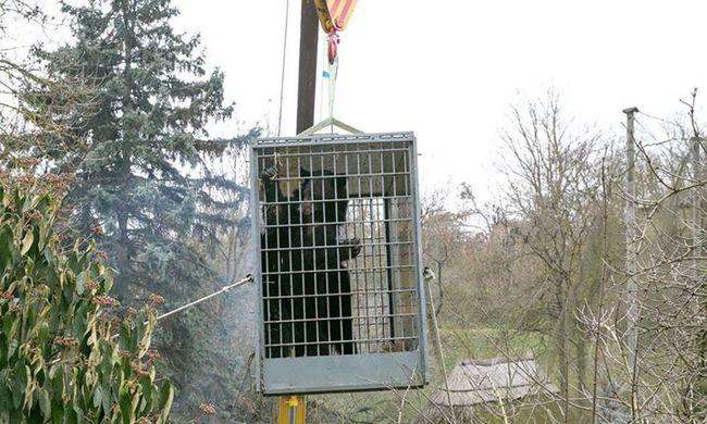 Fekete medvék költöztek a veszprémi állatkertbe
