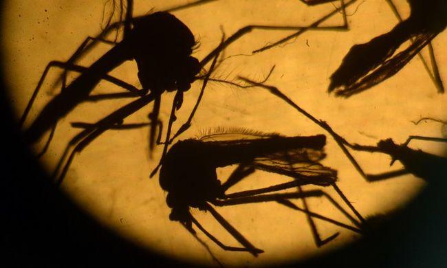 Zika: az óvszert javasolják, a csókolózást nem