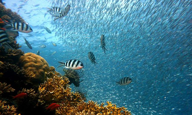 A hajók zaja miatt sokkal több halat ölnek meg a ragadozók