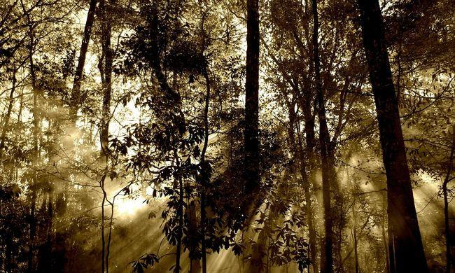 Az erdőtelepítés nem enyhítette, hanem erősíthette a felmelegedést Európában