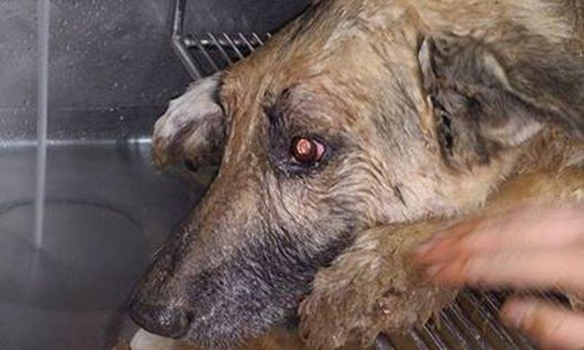 Lefolyócsőben tűnt el a kutya, három nap múlva mentették ki