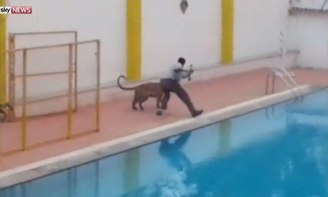 Itt a videó arról, ahogy leopárdot kergettek az iskolában