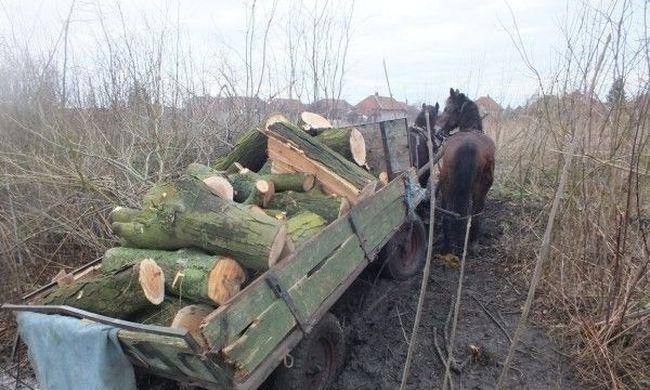 Lovaskocsival akarták elvinni a lopott fát