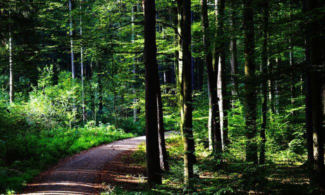 Elloptak egy egész erdőt Brandenburgban