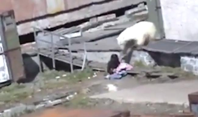 Csirkével akarta megetetni a jegesmedvét, lecsúszott nadrággal futott el, miután majdnem belehalt - videó