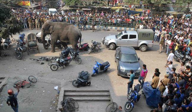 Ámokfutó elefánt taposta el a motorokat - videó