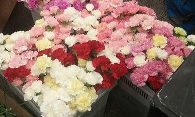 900 szál szegfűt vett, hogy minden lánynak adhasson virágot az iskolában