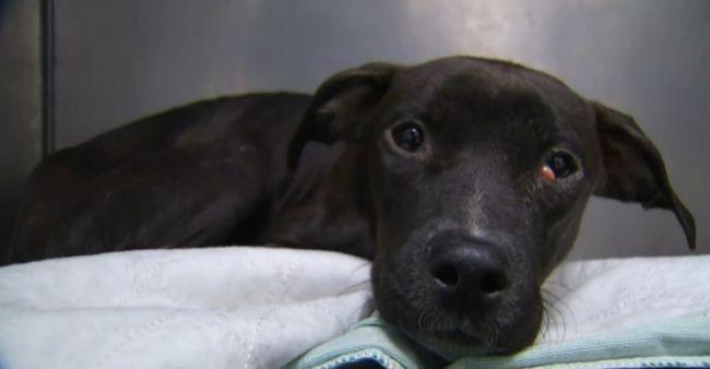 Jégbe fagyva találta meg a beteg kutyát