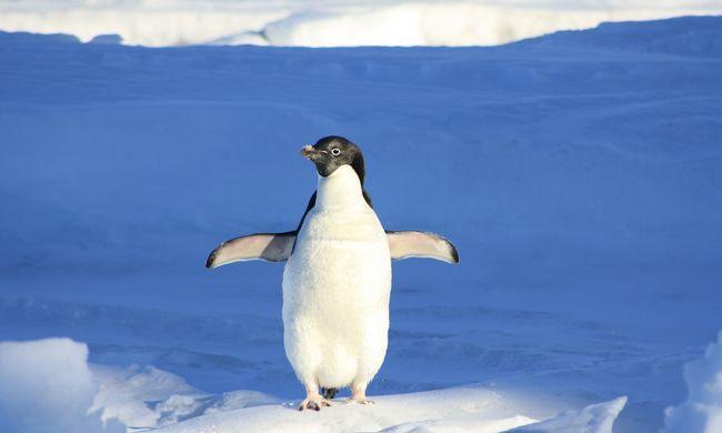 150 ezer pingvint ölt meg egy hatalmas jéghegy
