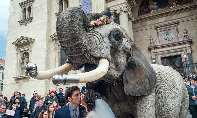 Esküvő elefántháton - elképesztő fotók!