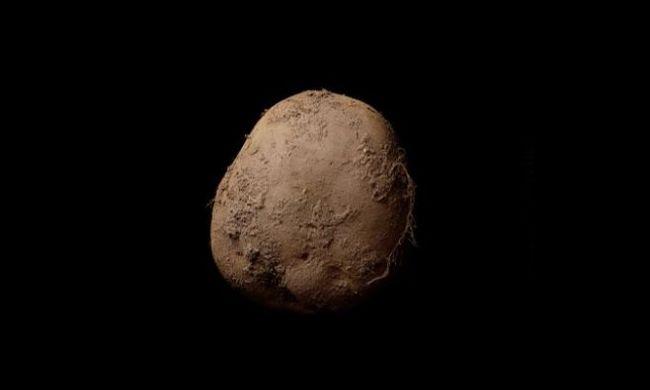 Íme a krumpli, amely 320 millió forintba került
