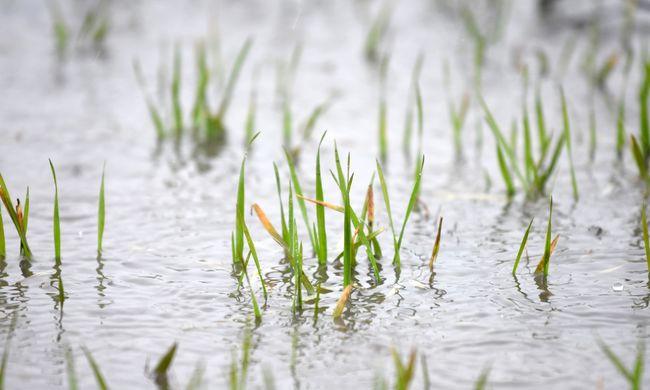 Túl sok eső esett Békés megyében, belvízvédelmi készültséget rendeltek el