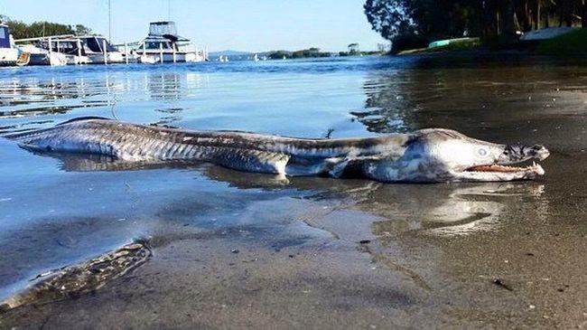 Krokodilszerű szörnylényt találtak a parton