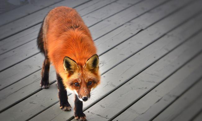 Veszélyes visszaengedni az állatokat a természetbe kutatók szerint