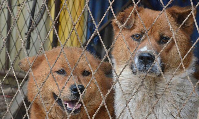 Leláncolva, víz nélkül és zsúfoltan összezárva tartottak több mint száz kutyát