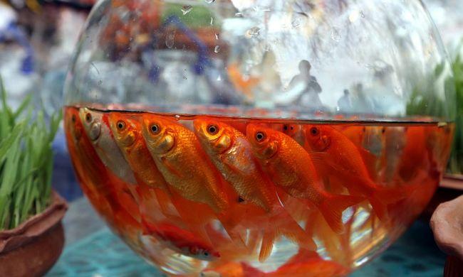 Égő cigarettát nyomtak el a nyelvén, máskor mérgezett halakat etettek a lánnyal