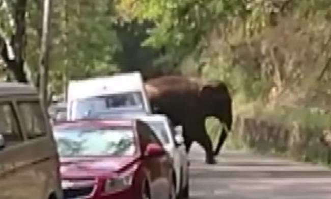 Parkoló autókra támadt egy szerelmi bánatos elefánt Kínában - videóval!