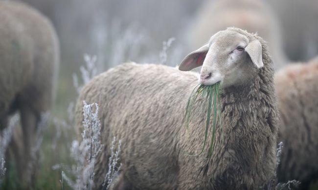 Brutális állatkínzás: purhabbal ölték meg, majd lefejezték