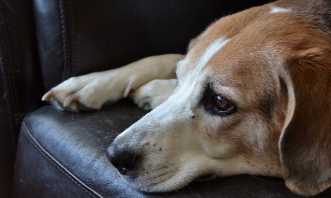 Számszeríjjal lőtte le szomszédja kutyáját egy rendőr