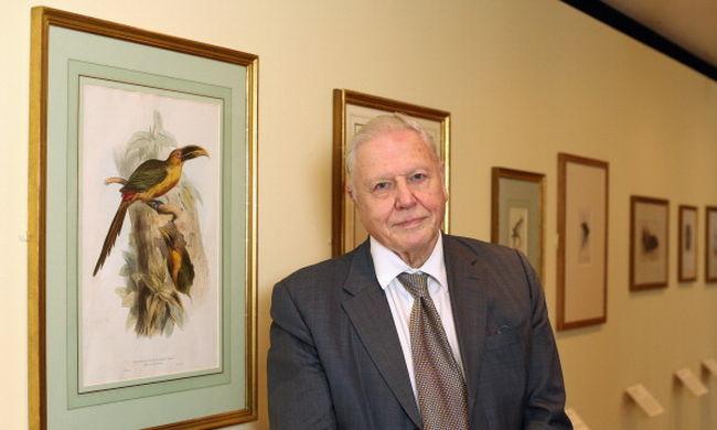 David Attenborough még mindig járja a világot