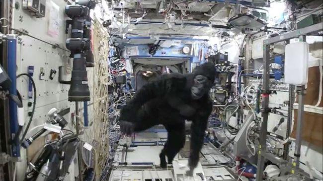Gorillajelmezben üldözte társait az űrhajós - videó