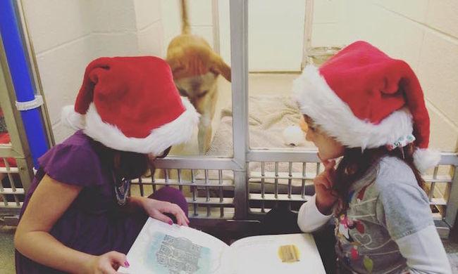 Gyerekek olvasnak fel kidobott kutyáknak - megható videó!