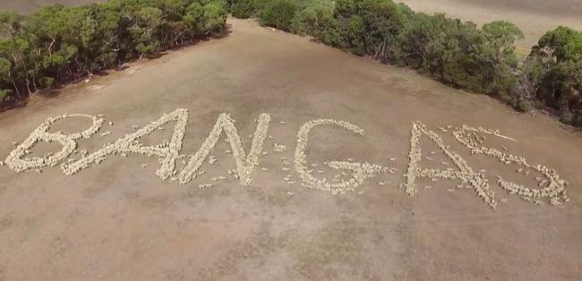 2000 birkából fogalmazták meg tiltakozó üzenetüket a farmerek - videó