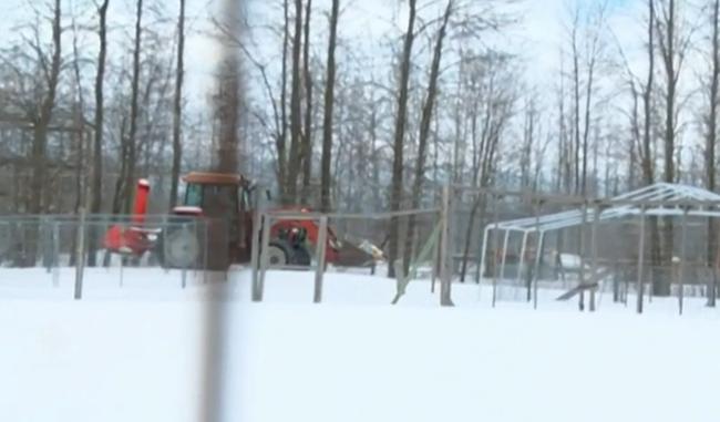 Lelőttek egy fehér oroszlánt az állatkertben, mert áttörte a kerítést - videó