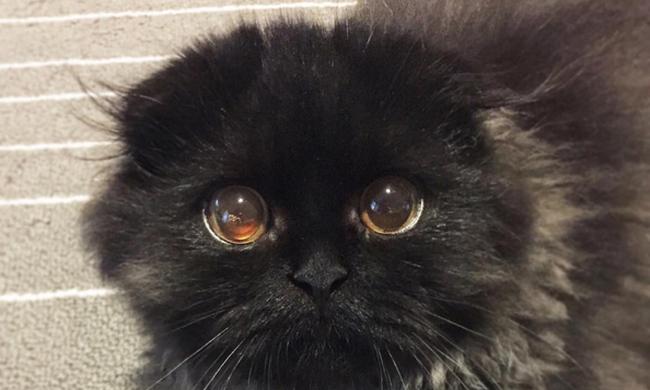 Ennek a macskának van a legnagyobb szeme a világon - képek