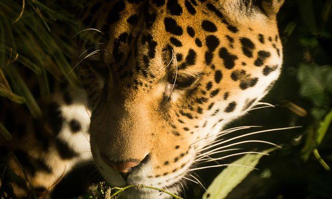 Először forgatott magyar stáb Peru egy érintetlen őserdejében