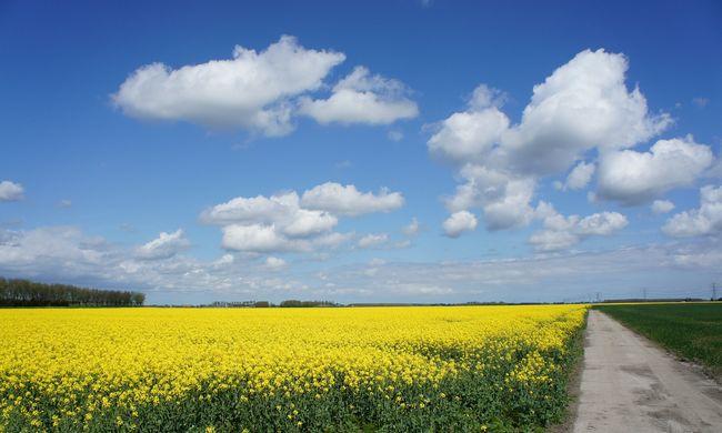 Egyre többen használnak bioüzemanyagot Magyarországon