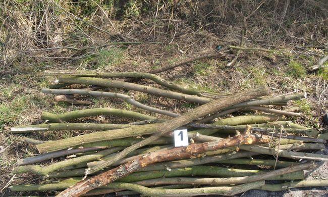 Fát akart lopni, de az erdészek tetten érték