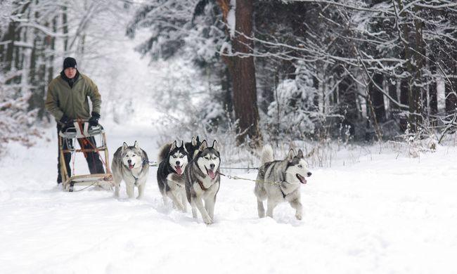 Tehervonattal vitték a havat a kutyás szánhúzó versenyre