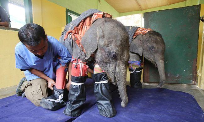 Pizsamába öltöztették az elefántokat, hogy tudjanak aludni