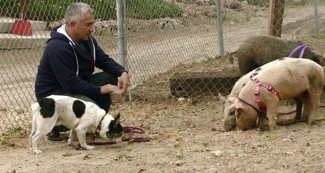 Állatkínzás miatt indult petíció a világhírű kutyaidomár ellen