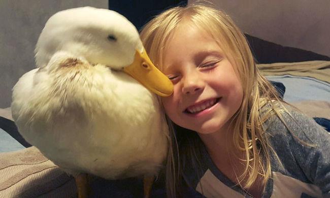 Az anyukájának hiszi a kacsa az ötéves kislányt - videó