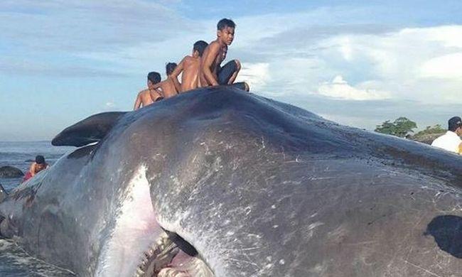 Partra vetődött, halott bálnára másztak fel az emberek, hogy közös képet készítsenek