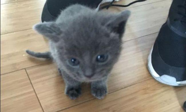 Kiscicákkal teli bőröndöt dobtak ki, az egyiknek vér folyt a füléből, egy másik elpusztult
