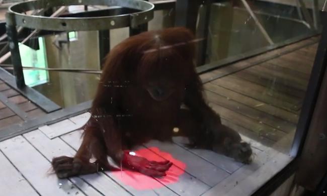 Kinecttel játszanak a majmok az állatkertben - videó!