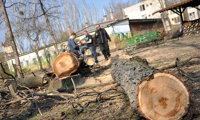 Megakadályozták a fák kivágását a Városligetben