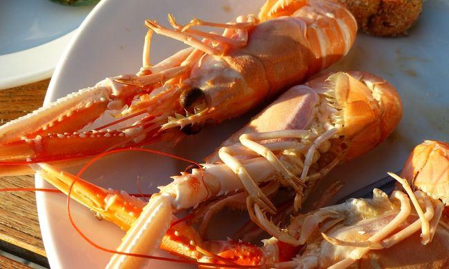 Annyi homár van Svédországban, hogy már nem bírnak velük