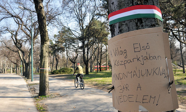Zugló polgármestere: Ha kell, a testünkkel védjük meg a fákat