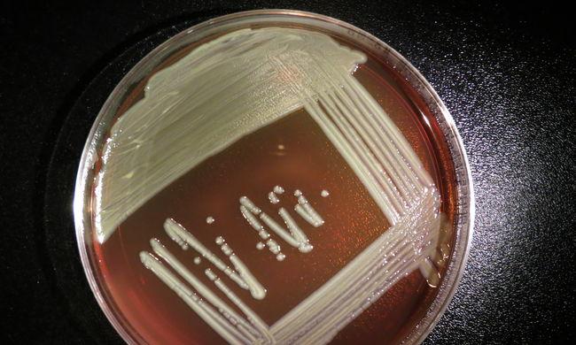Már 17 áldozata van a rejtélyes járványnak