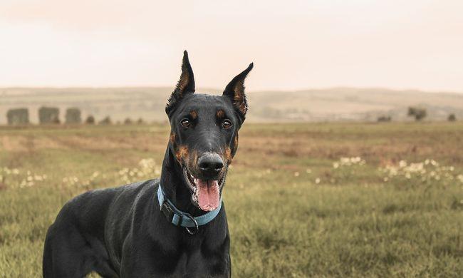 Labdázó kislányra támadt egy kutya Szombathelyen