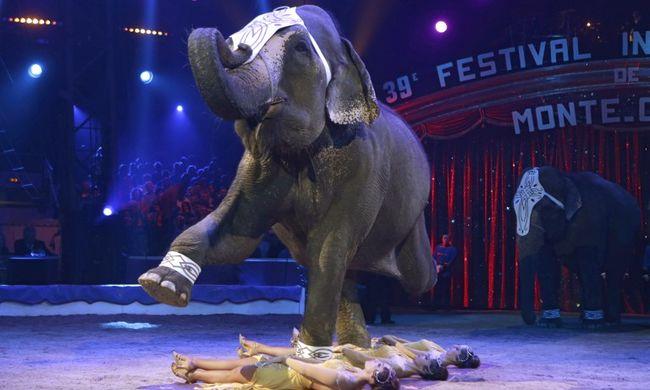 Betiltanák az állatok cirkuszi szerepeltetését