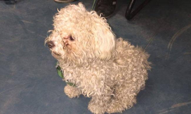 Ellopta Pötyi kutyát, de a vasútállomáson elfogták a rendőrök
