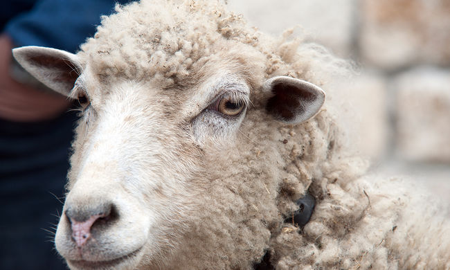 Összeveszett öt juhász, az egyikük nem élte túl a vitát