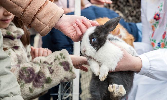 Húsvéti családi forgatag nyuszisimogatással és tojásfestéssel - fotógaléria