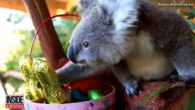 Így találják meg az állatok a húsvéti meglepetéseket az állatkertben - videó