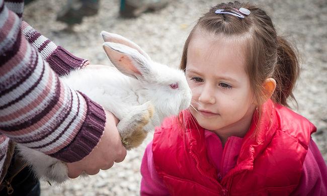 Így simogattak nyulakat a gyerekek Húsvétkor - képgaléria